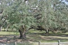 Live Oak Rolling Hills Dunnellon FL