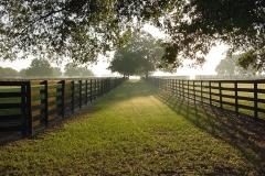 Dawn Winding Oaks Farm