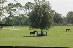 Ocala horse farm