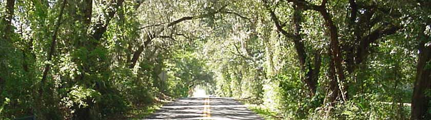 Ocala Florida live oak trees hanging over a back road