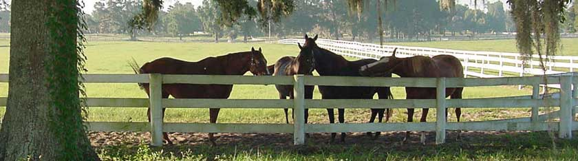 Ocala Florida horses at fence