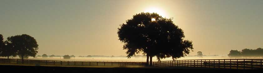 Ocala Florida sunrise behind a tree