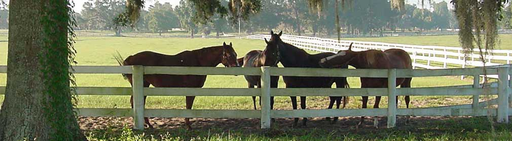 Horses at fence in Ocala, Florida