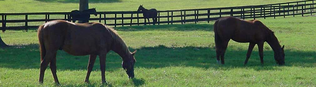 Horses in field in Ocala Florida