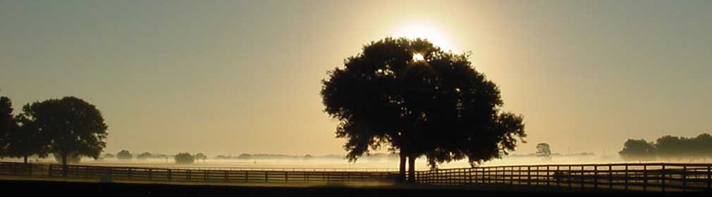 Ocala Florida sunrise behind tree